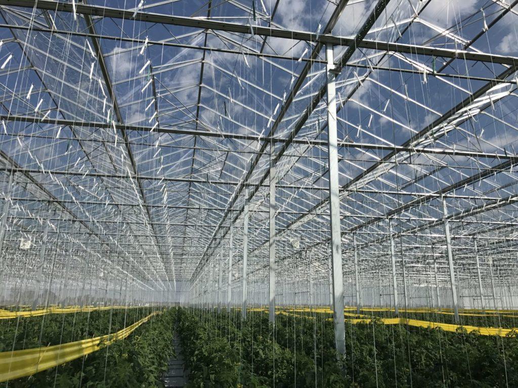 Marktlink begeleidt tuinbouwleverancier Horticoop bij verkoop groothandelsactiviteiten